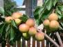 Мій Сад
