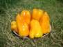 Овочеве насіння