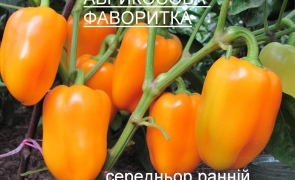 АБРИКОСОВА ФАВОРИТКА