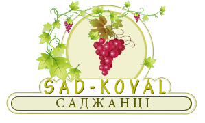 Sad-Koval